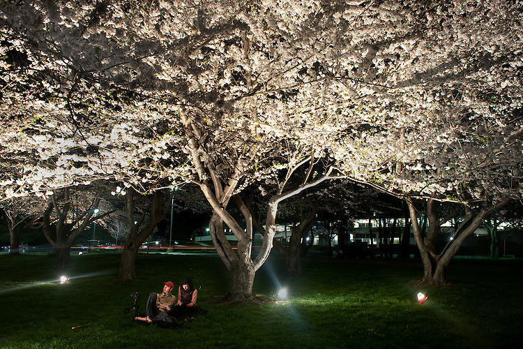 Keith and Kristin Barron enjoy the  cherry blossoms as they sit beneath the stand of cherry trees donated to OU by Chubu University. Photo by: Ross Brinkerhoff.