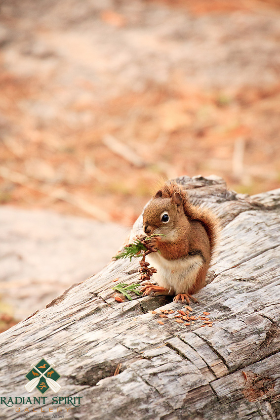 &quot;The Harvest&quot;<br />