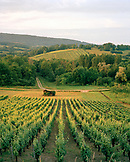 FRANCE, Arbois, vineyard landscape in the surrounding Arbois countryside, Jura Wine Region