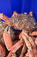 Europe/France/Bretagne/29/Finistère/ Concarneau:Araignée de mer  sur un étal du marché