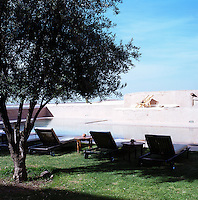 Sun loungers in the shade of an old olive tree by the side of the swimming pool