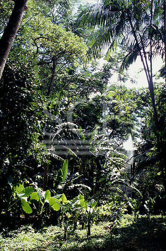 Rio de Janeiro State, Brazil. Mata Atlantica Atlantic rain forest in the gardens of Burle Marx, architect.