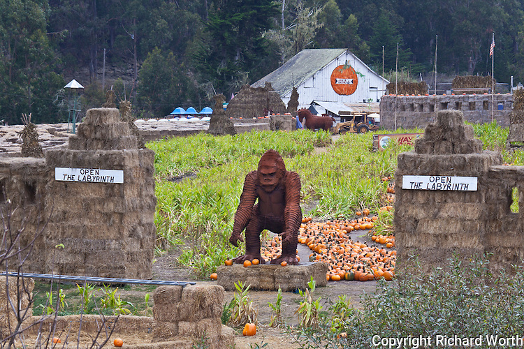 A giant, metal, King Kong sculpture towers over pumpkins at Arata's Farm which features a straw bale maze among its Halloween attractions.