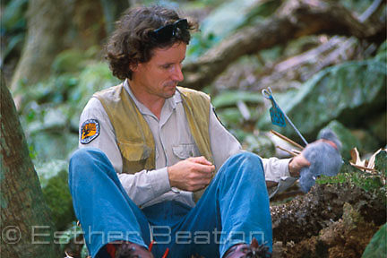 Nicholas Carlisle of National Parks and Wildlife Service studying Gould's Petrels on Cabbage Tree Island, NSW.