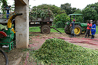 ZAMBIA, Mazabuka, medium-scale farm of Devlin Chilala, grate or shred corn for animal fodder