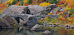 Mount Baker-Snoqualmie National Forest, WA <br /> Stone arch bridge over Bagley Creek as it flows through a rocky canyon with autumn colors of huckleberries, grasses and mountain ash at Heather Meadows