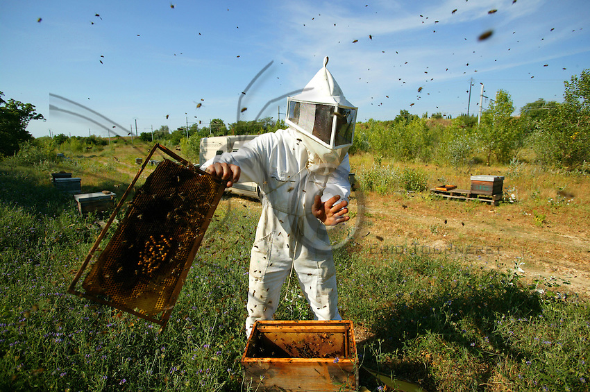 Scattering bees from a frame after a change of hive.