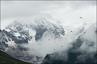 Morning clouds covered this mysterious Tibetan gacier mountain, a few ravens flying by...