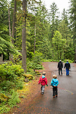 USA, Oregon, Santiam River, Brown Cannon, two young boys walking behind their dads in the Willamete National Forest on their way to the Santiam River