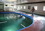 A thoroughbred swims in  the pool at Westampton Farm and Training Center in Westampton, New Jersey