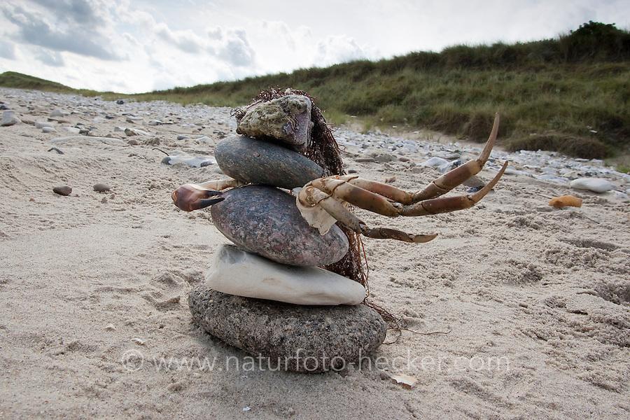 """Naturkunst am Strand, Kind hat aus Steinen, Algen und Krebsscheren eine Figur auf dem Sandstrand gebaut, """"Krabbenkämpferin"""", Strandkunst, Meer, Küste,"""