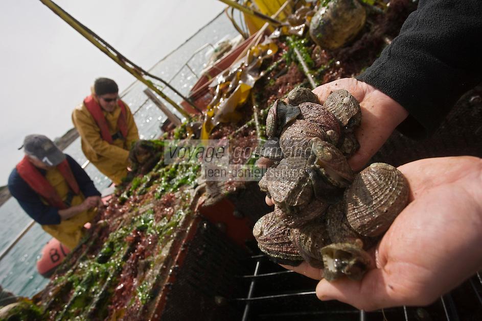 Europe/France/Bretagne/29/Finistère/Plouguernau: Sylvain Huchette de France Haliotis éléve ses ormeaux en pleine mer