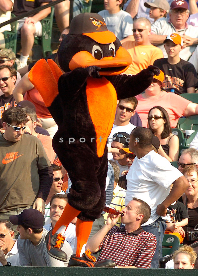 ORIOLES BIRD, of the Baltimore Orioles, in action during the  Orioles game against the Oakland A's in Baltimore Maryland on April 24, 2007...A's win 4-2...DAVID DUROCHIK / SPORTPICS..