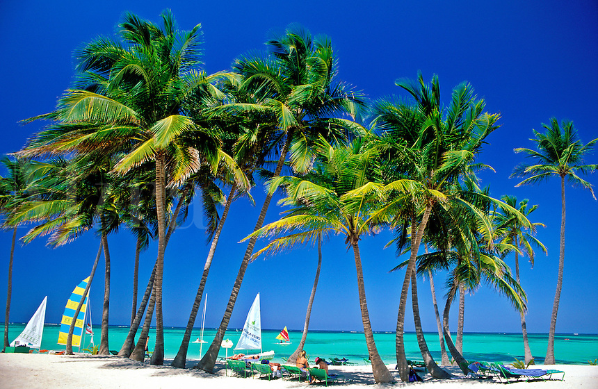 Dominican Republic, Punta Cana, Bavaro Beach. Palm trees Caribbean Sea and sail boats