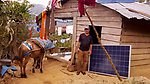 Nancy's husband with his donkey and a solar panel he hauled up the mountain.  The panel is government issued for a low monthly rental fee, and when installed, offers the prospect of lighting for the first time.