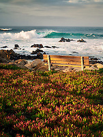 Bench with ice plant and ocean. Pacific Grove, California