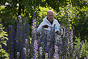 07/07/15<br /> <br /> Head Gardener, Trevor Jones, inspects Ironweed or Bluebottle/Echium vulgare which can cause a slow death from liver damage.<br /> <br /> The Poison Garden, Alnwick Garden.<br /> <br /> All Rights Reserved: F Stop Press Ltd. +44(0)1335 418629   www.fstoppress.com.