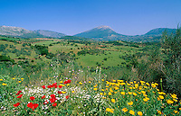 Greece, Peloponnese: a large peninsula, located south of Greece Mainland - upcountry landscape | Griechenland, Peloponnes: Halbinsel im Sueden des griechischen Festlands - Landschaft im Landesinnern