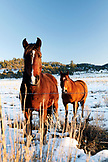 USA, New Mexico, horses in Carson National Park