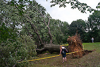 New York, NY -  19 August 2009 - On the night of August 18 a severe storm passed through Riverside Park, Central Park, and Randalls Island, with winds up to 70 mph. Over 100 trees in the north end of Central Park, near the Great Hill and the North Woods were felled. Another 500 were seriously damaged by the storm.