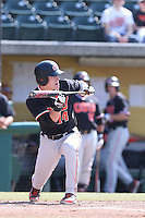 Caleb Hamilton #14 of the Oregon State Beavers looks to bunt during a game against the Southern California Trojans at Dedeaux Field on May 23, 2014 in Los Angeles, California. Southern California defeated Oregon State, 4-2. (Larry Goren/Four Seam Images)