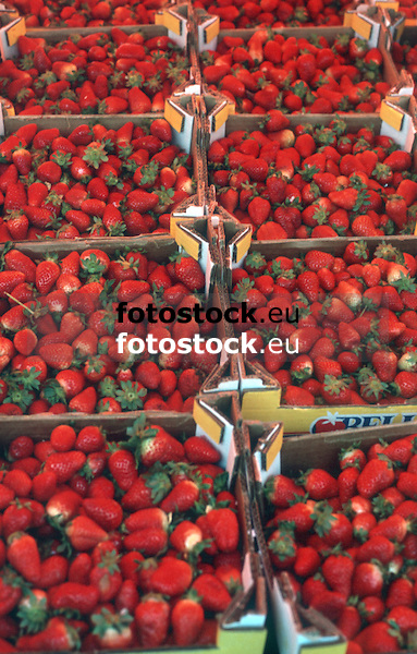 fresh strawberries displayed at a farmer's market<br /> <br /> fresas frescas en el mercado<br /> <br /> frische Erbeeren auf dem Wochenmarkt<br /> <br /> 3597 x 2295 px<br /> Original: 35 mm slide transparency