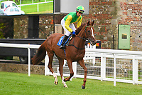 Keeper's Choice ridden by Michael Pitt goes down to the start of The Shadwell Racing Excellence Apprentice Handicap Div 1 during Horse Racing at Salisbury Racecourse on 14th August 2019