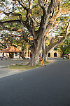 Man sweeping leaves in historic fort area of the town of Galle, Sri Lanka