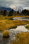 Pond and stream in meadow at Grand Teton National Park, Wyoming
