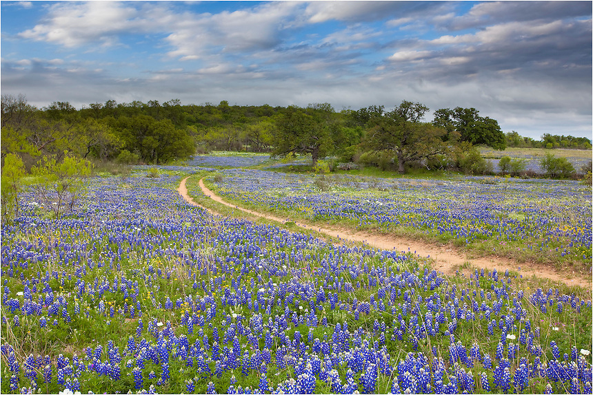 Follow the path less trodden - and enjoy the Texas Bluebonnets in the Hill Country.