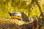 Animals of Florida