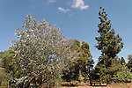 Israel, Sharon region. The trees garden in Ilanot