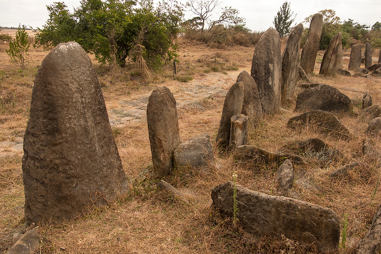 The stones mark the mass graves of males and females who died when they were between 18 and 30 years of age, and who were laid to rest in a foetal position about 700 years ago.