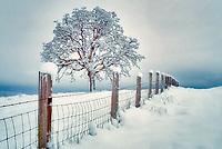 Snow covered oak and fence near Bellfountaim, Oregon