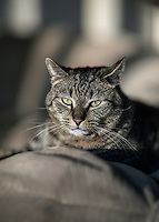 Tabby cat portrait.