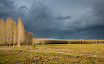 Idaho, North, Kootenai County, Hayden. Brooding skies over a grove of trees on the Rathdrum Prairie on a spring evening.