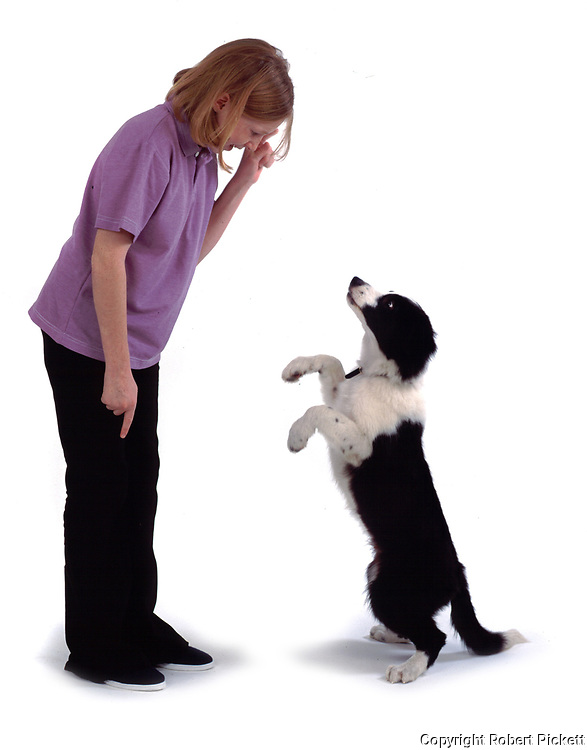 Young girl, playing with puppy border collie dog, 12 years old, studio, white background, cut out, pet, domestic