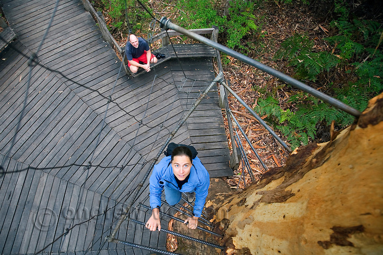 A woman climbs the spiral stairway of the Gloucester Tree in the Gloucester National Park.  The 60 metre high karri tree was previously used as a fire lookout.  Pemberton, Western Australia, AUSTRALIA.