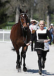 April 23, 2014: Gin & Juice and Hawley Bennett-Awad during the first horse inspection at the Rolex Three Day Event in Lexington, KY at the Kentucky Horse Park.  Candice Chavez/ESW/CSM