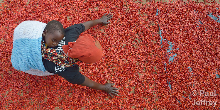 Evelyn Nkhambule, her grandson Jesse on her back, stirs chilies she has spread out to dry in the sun at her home in Edundu, Malawi. Families in the village have benefited from intercropping, crop rotation, and composting practices they learned from the Malawi Farmer-to-Farmer Agro-Ecology project of the Ekwendeni Mission Hospital AIDS Program, a program of the Livingstonia Synod of the Church of Central Africa Presbyterian.