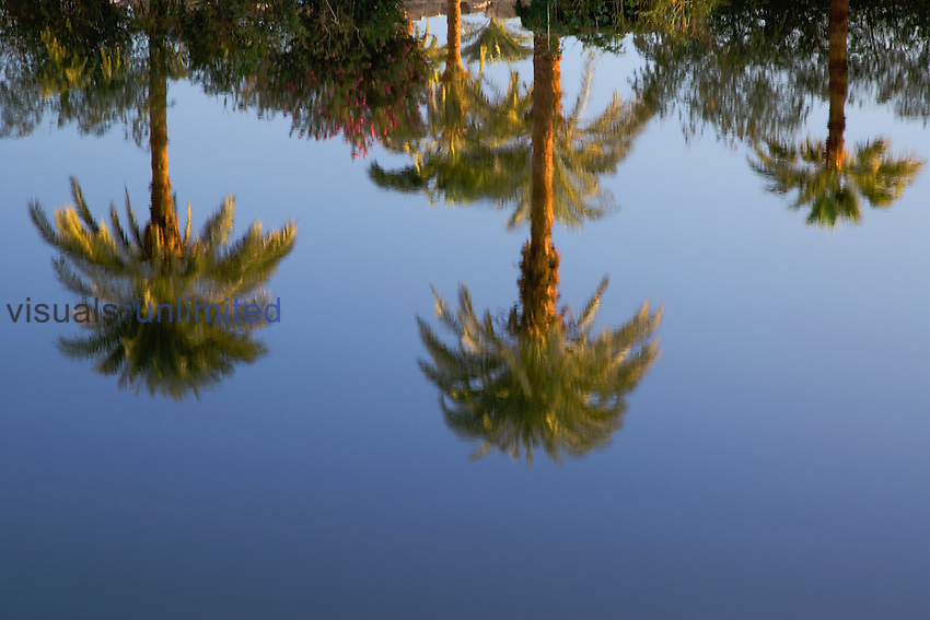 Palm trees reflecting on the Sacred Lake, at the Temple of Karnak in Thebes or modern day Luxor, Egypt