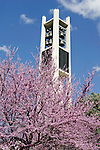 0704-01 GCS April 2007 Spring on Campus..Trees blossoming, Bell Tower.April 13, 2007..Photo by Kenny Crookston/BYU..Copyright BYU Photo 2007.All Rights Reserved.photo@byu.edu  (801)422-7322