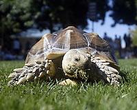 Tortoise - Turtles