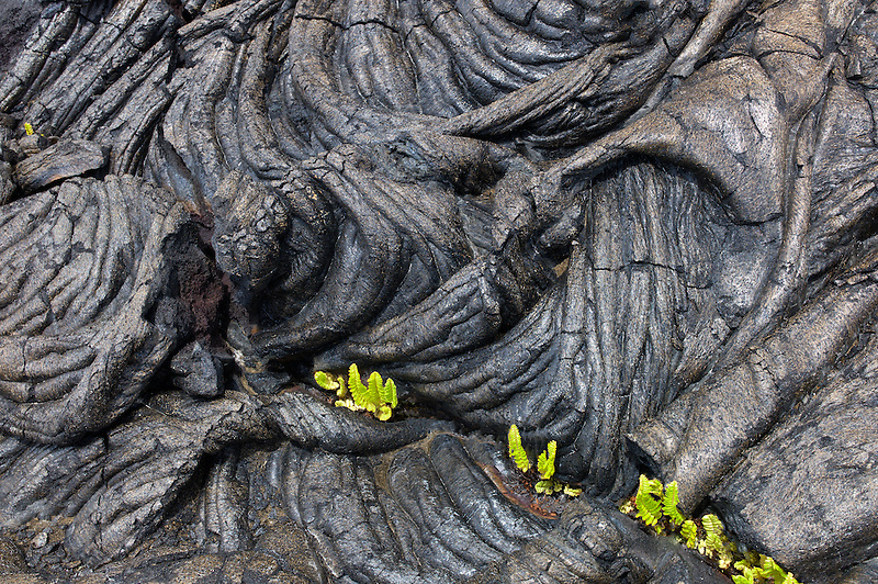 Pahoehoe lava and ferns Hawaii Volcanoes National Park, The Big Island.
