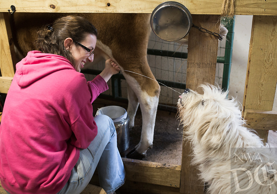 "NWA Democrat-Gazette/CHARLIE KAIJO Grace Pepler of Harriet, 17, offers her dog Sophie a drink while milking her cow Abbie, Thursday, November 8, 2018 at the Dogwood Hills guest house in Harriet.<br /> <br /> Tucked away in the northern hills of Arkansas sits Dogwood Hills guest house, one of the few spots in the state where locals and out-of-towners alike can farm without knowing a lick of farming. This kind of experience, where people can escape from the bustle of city life for a day to milk a cow or two and later enjoy a farm-to-table meal, is part of the burgeoning agritourism industry happening here in what some may call aptly ""the country."""