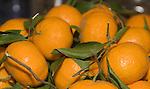 Oranges, Pecorino Restaurant, Rome, Italy