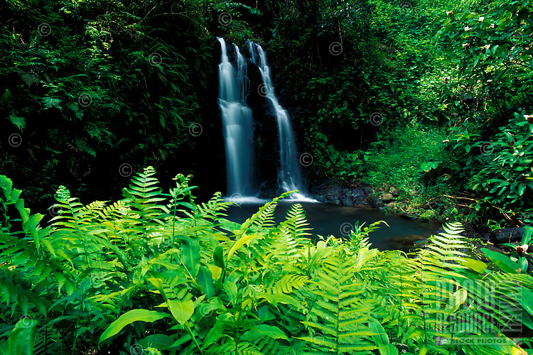 Ferns partially frame a waterfall on the road to Hana, Maui.