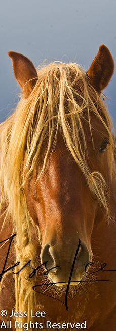 Wild Horse Photo, image,photography Wild Horse Photography by western photographer Jess Lee. Pictures of mustangs in the West. Fine art images,Prints,photos Wild horse photo,wildhorses in the american west,