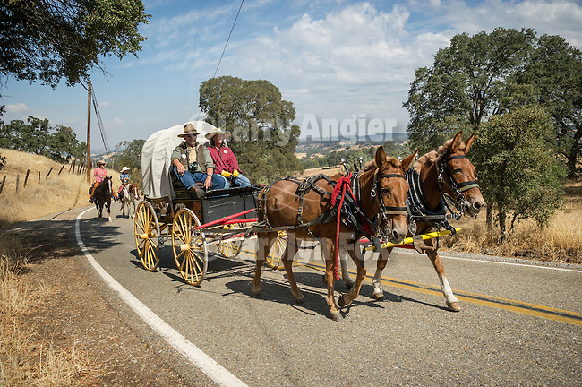 Days of '49 wagon train as they travel the back roads of Amador County, Calif., between Amador City and Sutter Creek, Calif.<br /> <br /> Diamond Jubilee commemoration of the founding of Amador County in 1854