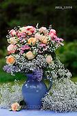 Carl, FLOWERS, photos, SWLA12008,#f# Blumen, Natur, flores, naturaleza
